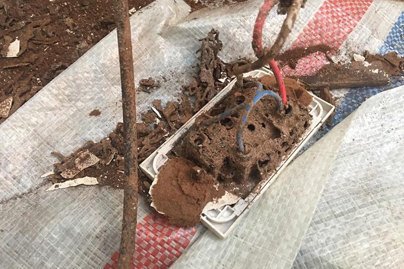 ổ điện bị mối mọt ăn