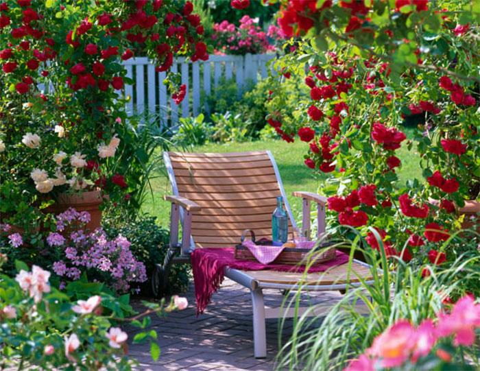 trồng các loại cây leo với nhiều loại hoa sặc sỡ